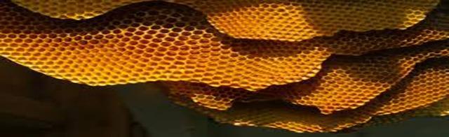 honeycomb1140x350