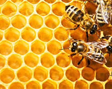 honeycomb380x300